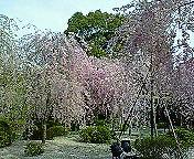 京都にきています